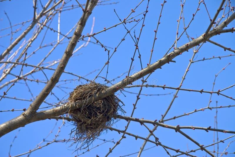 Jerarquía 01 del pájaro fotos de archivo