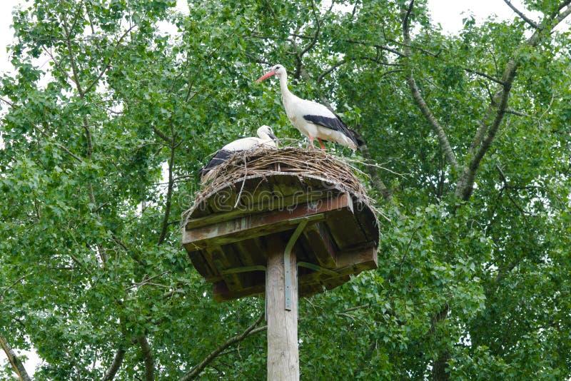 jerarquía de la cigüeña en el vondelpark de Amsterdam fotografía de archivo