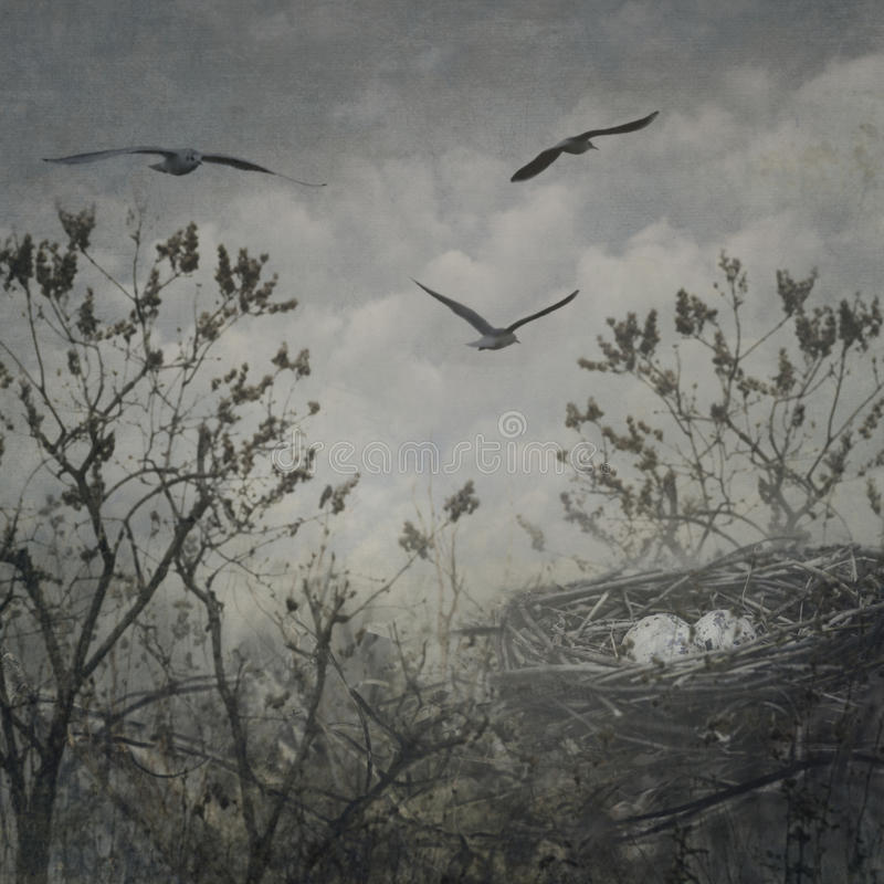 Jerarquía del pájaro imágenes de archivo libres de regalías