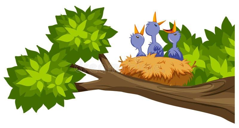 Jerarquía del pájaro en rama de árbol libre illustration