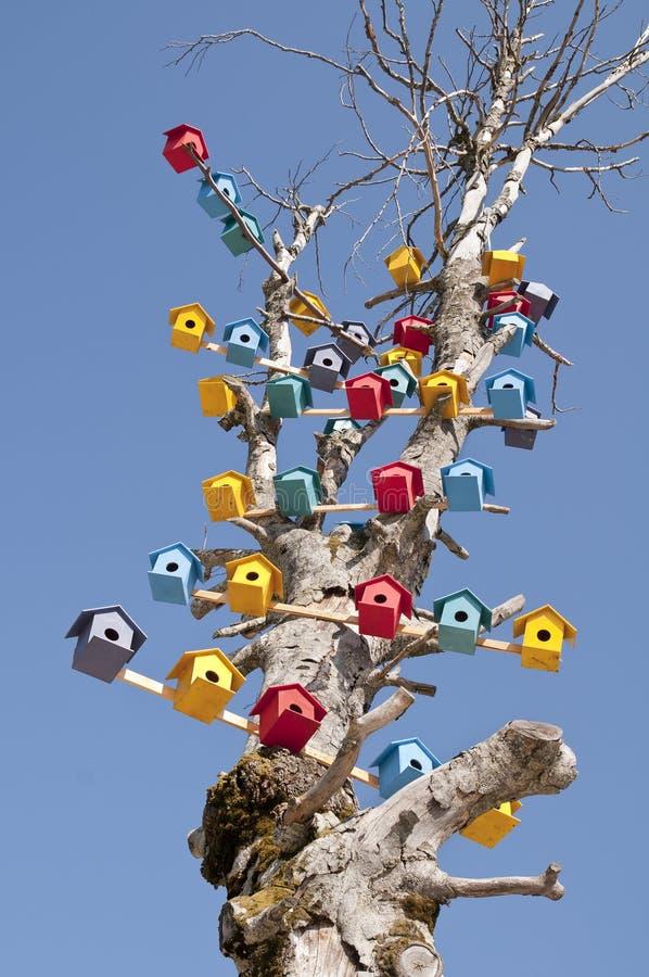 Jerarquía del pájaro en un árbol fotografía de archivo