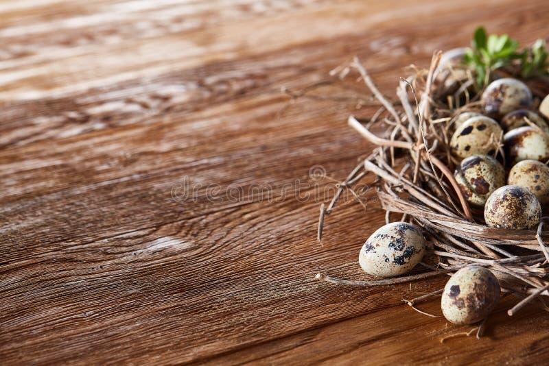 Jerarquía del sauce con los huevos de codornices en el fondo de madera oscuro, visión superior, primer, foco selectivo foto de archivo libre de regalías
