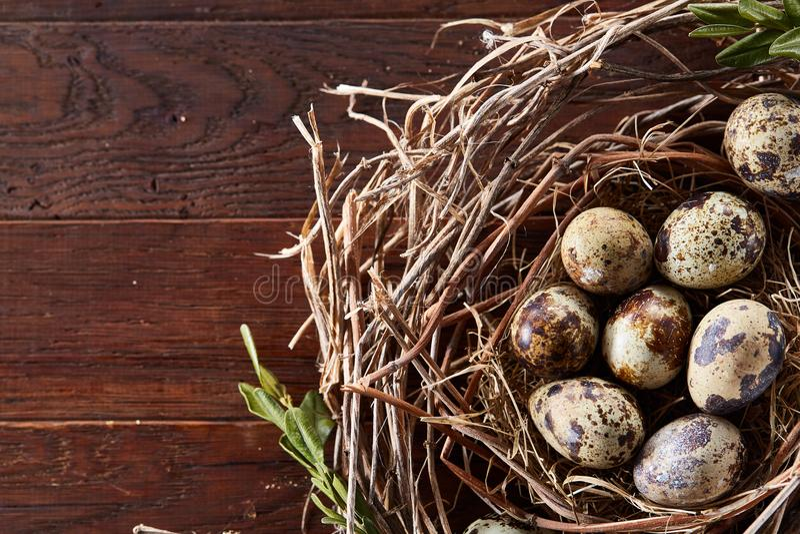 Jerarquía del sauce con los huevos de codornices en el fondo de madera oscuro, visión superior, primer, foco selectivo fotografía de archivo