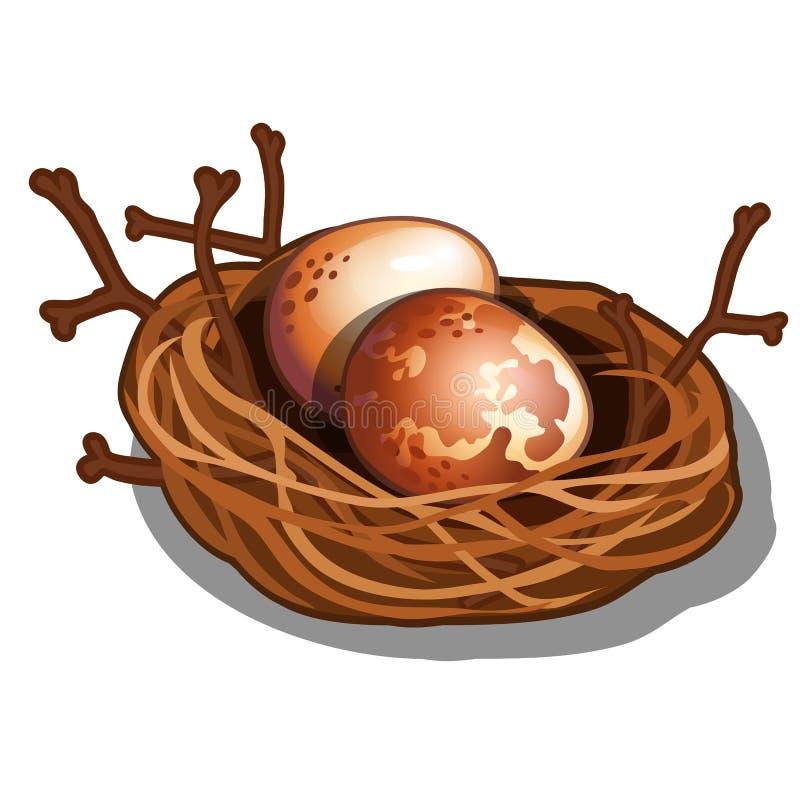 Jerarquía tejida de la paja con las ramitas aisladas en el fondo blanco Huevos de pájaros salvajes Ejemplo del primer de la histo stock de ilustración