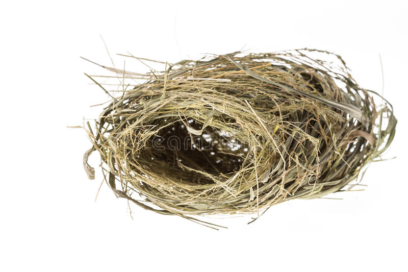 Jerarquía vacía del pájaro aislada en el fondo blanco fotos de archivo libres de regalías