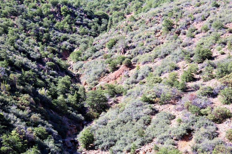 Jerome Arizona State Historic Park royalty free stock image