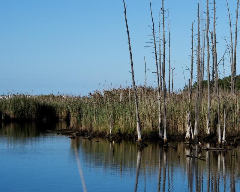 Jersey Shore Marshes and Wetlands. Landscapes of wetlands at Cattus Island Park in Toms River, New Jersey stock photos