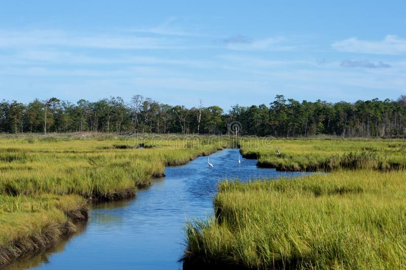 Jersey Shore Marshes and Wetlands. Landscapes of wetlands at Cattus Island Park in Toms River, New Jersey stock photo