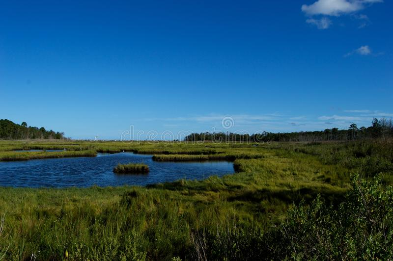 Jersey Shore Marshes and Wetlands. Landscapes of wetlands at Cattus Island Park in Toms River, New Jersey stock image