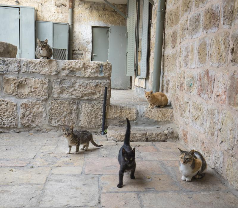 Jerusalem Alley Cats. Four alley cats in an alley in the old city of Jerusalem, Israel royalty free stock photos