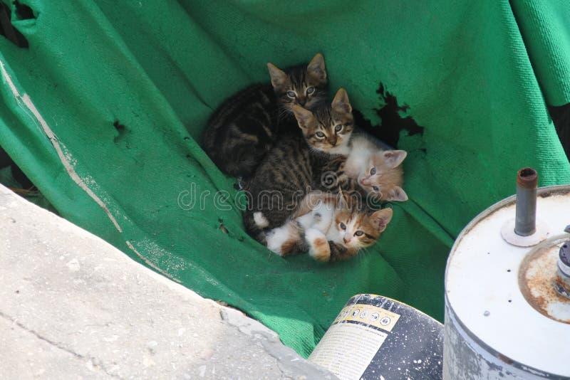 Jerusalem - Kätzchen stockbilder