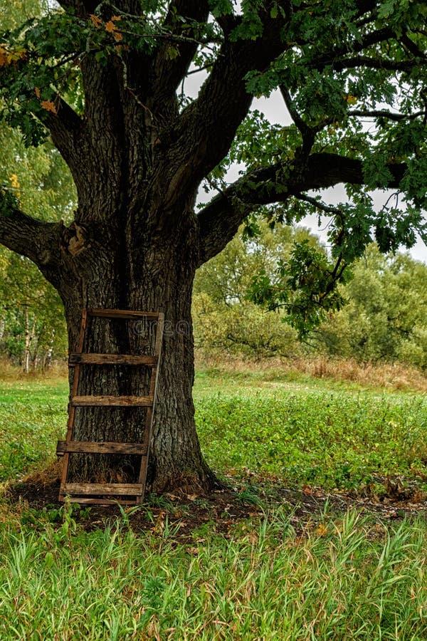 jesień drzewo osamotniony dębowy obraz royalty free