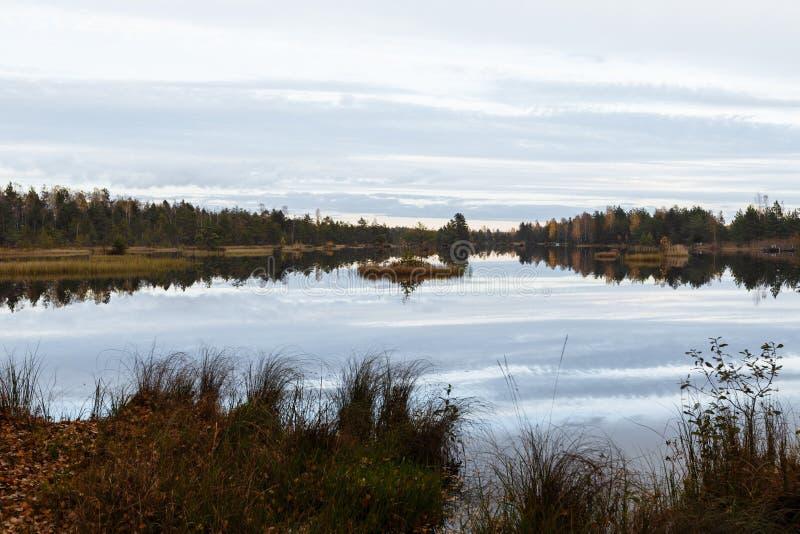 Jesień krajobraz Popołudnie, bagno i las w tle, Latvia Błoto i mąci mokrą ziemię obrazy royalty free
