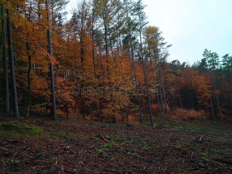 Jesień las piękno natura w spadku obrazy royalty free