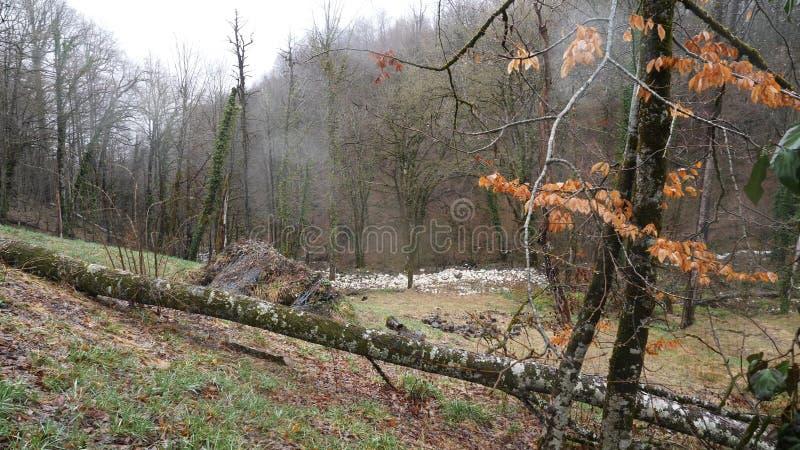 Jesień las z mechatymi drzewami po deszczu Piękny tajemniczy spokój las po deszczu, w chmurnej pogodzie w jesieni fotografia royalty free