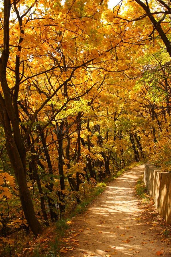 jesień ścieżka zdjęcie stock