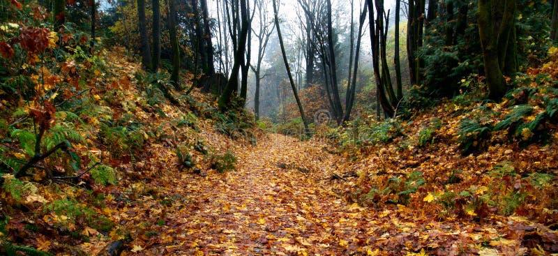 jesień ścieżka mgłowa lasowa zdjęcia stock