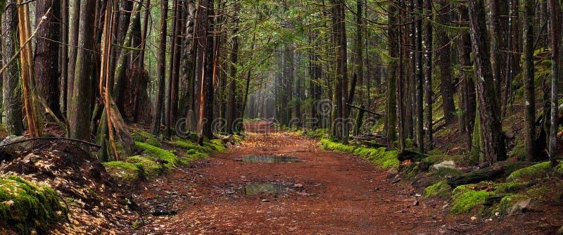 jesień ścieżka zaczarowana lasowa obrazy stock