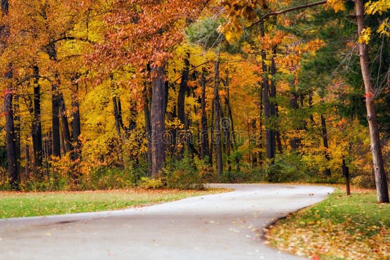 jesień ścieżki drewna zdjęcie royalty free