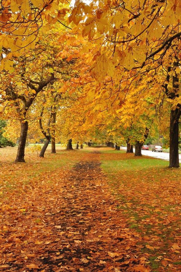 jesień ślad zdjęcia stock
