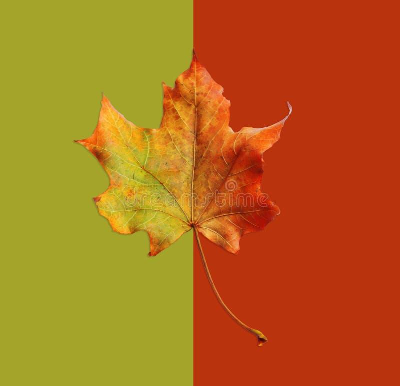 Jesień żółty liść na abstrakcjonistycznym tle zdjęcia royalty free