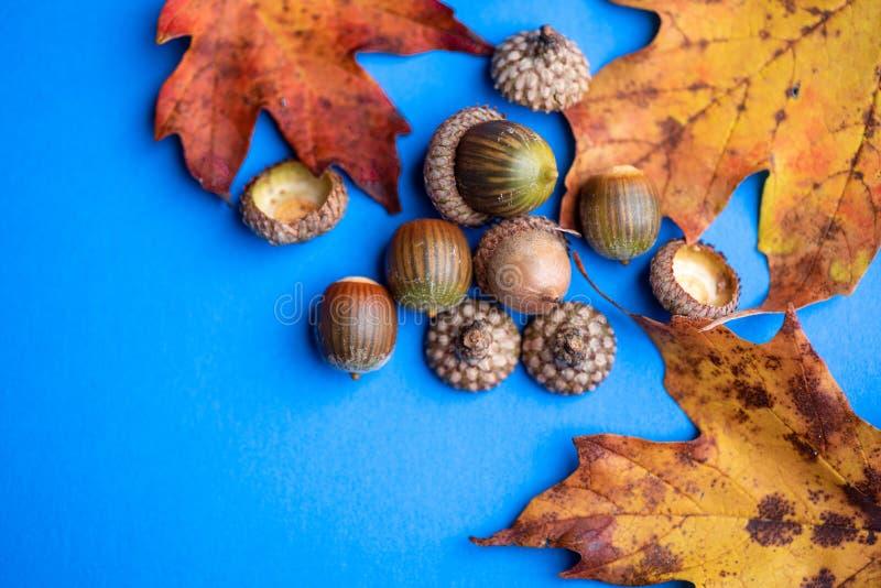 Jesień żółty liść na błękitnym tle zdjęcia stock