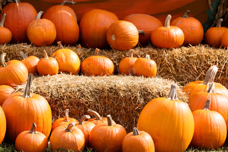 jesień żniwo zdjęcie stock
