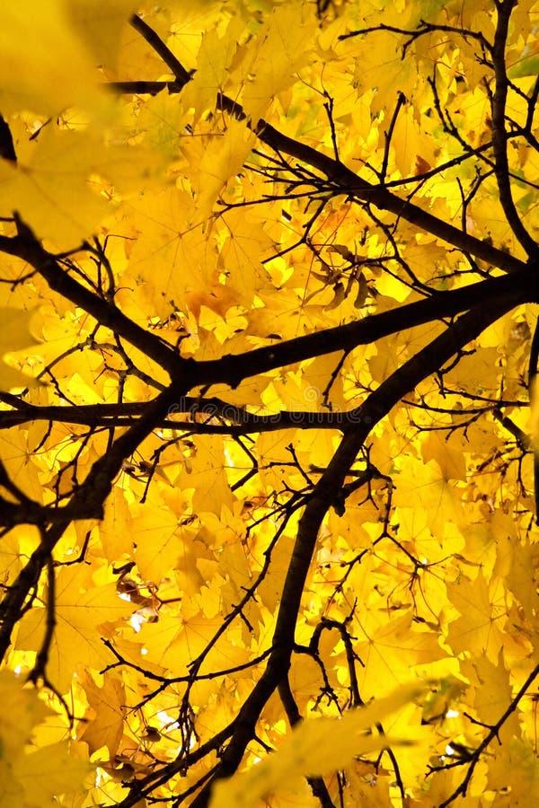 jesień 3 liść obrazy stock