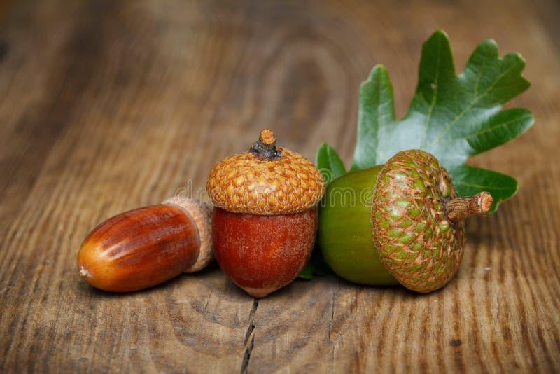Jesień acorn zdjęcia stock