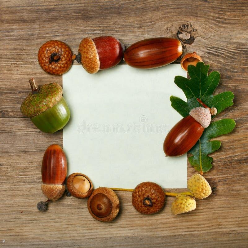 Jesień acorn rama obrazy stock