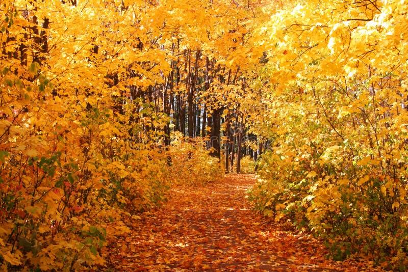 jesień aleja zdjęcie stock