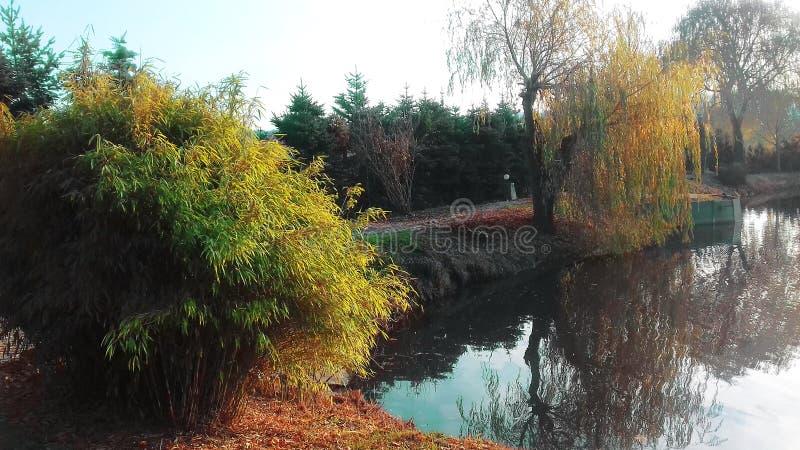 jesień błękit długa natura ocienia niebo Mały jezioro w ogródzie obraz royalty free
