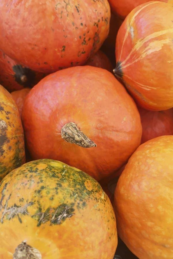 jesień banie inkasowe kolorowe targowe Dyniowy tło Banie w dyniowej łacie czeka sprzedającym zdjęcia royalty free