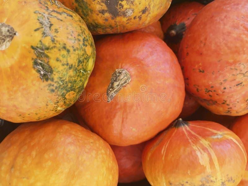 jesień banie inkasowe kolorowe targowe Dyniowy tło Banie w dyniowej łacie czeka sprzedającym zdjęcie royalty free