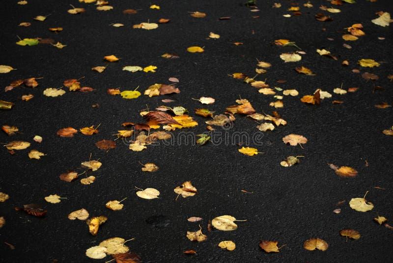 jesień barwiący liść fotografia royalty free