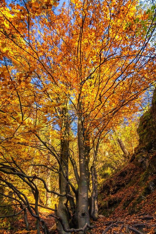 jesień barwi drzewa fotografia stock