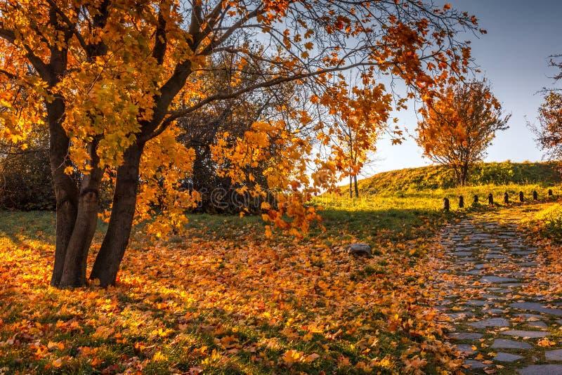 jesień barwi drzewa zdjęcie royalty free
