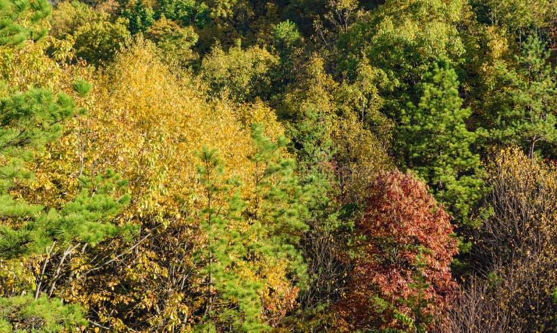 jesień barwi góry zdjęcia royalty free