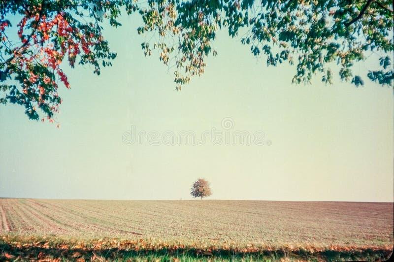 Jesień barwi i osamotniony drzewo w szwajcar wsi z analog fotografią i polach - 5 fotografia royalty free