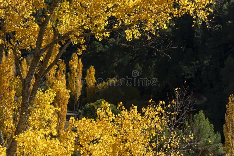 Jesień barwi, Rio Mundo źródło, Naturalny park Los Calares Del rÃo Mundo y De Los angeles Sima, sierra de Alcaraz y del Segura fotografia stock