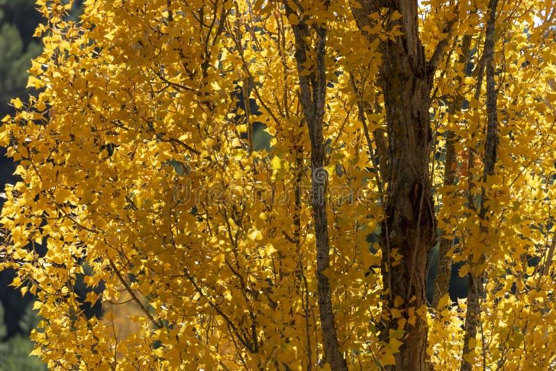 Jesień barwi, Rio Mundo źródło, Naturalny park Los Calares Del rÃo Mundo y De Los angeles Sima, sierra de Alcaraz y del Segura zdjęcie stock