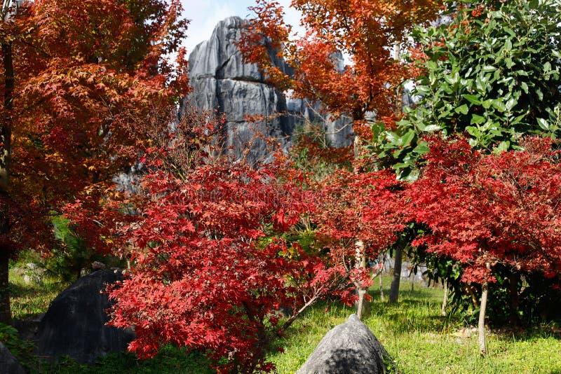 Jesień barwi w Kamiennym lasu krajobrazie w Yunnan, Chiny obrazy stock