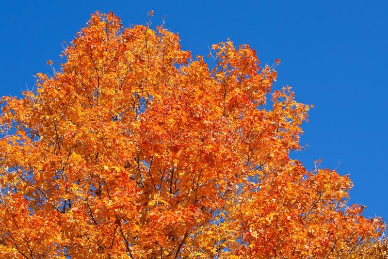 jesień barwi wibrującego zdjęcie royalty free