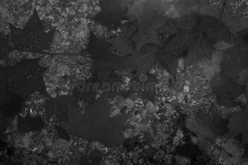 Jesień brown liść na przejrzystej wodzie staw i swój b fotografia royalty free