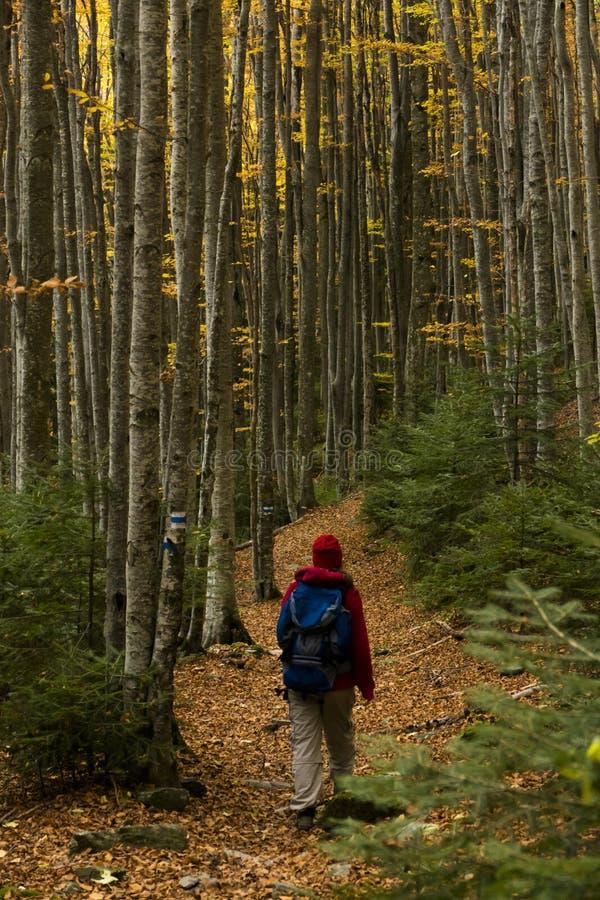 jesień buków fern chmurnego nieba oświetleniowego bardzo miękki toru obraz stock