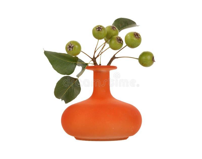 jesień bukiet rozgałęzia się bonkrety naturalnego drzewa obraz royalty free