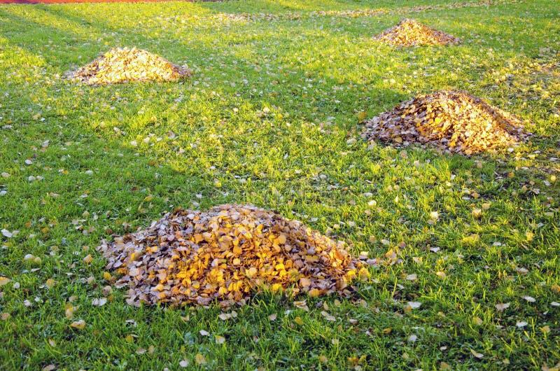 jesień cleaning ogródu liść stosy raken jarda fotografia royalty free