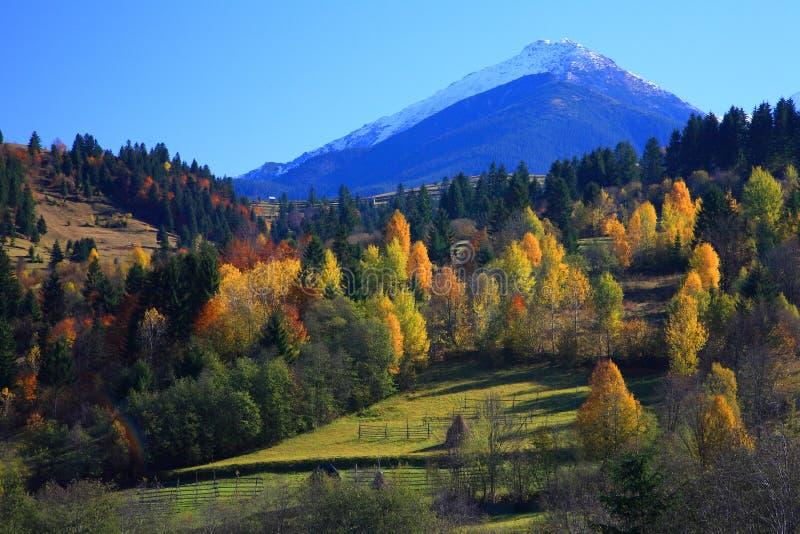 jesień colours obraz royalty free