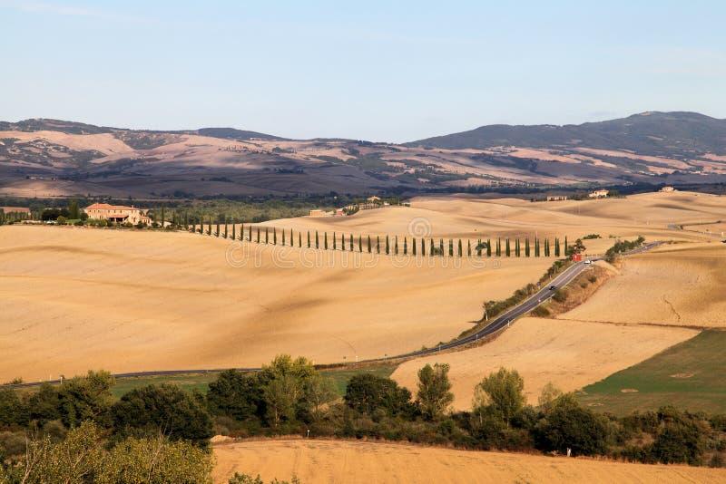 jesień cyprysów pola krajobrazowy Tuscany zdjęcia royalty free