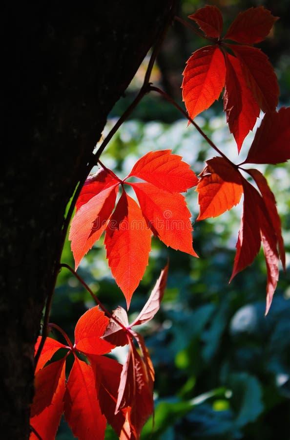 Jesień czas obrazy stock